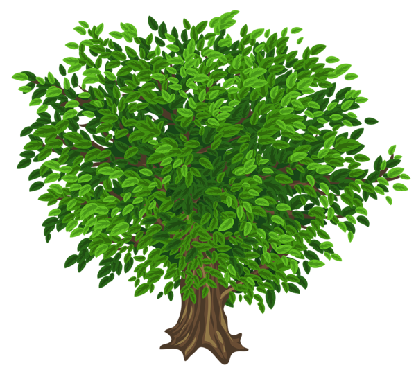 green png. Fig tree clipart