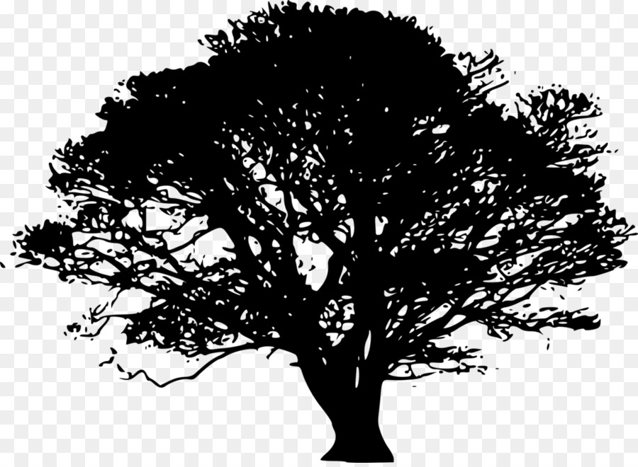 Fig tree images clipart picture freeuse download Oak clipart tamarind tree Circle Png, Vector, PSD, and Clipart With ... picture freeuse download
