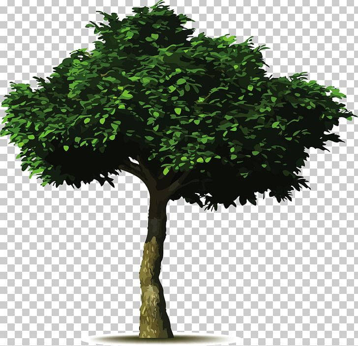 Fig tree images clipart svg black and white stock Common Fig Tree Planting Landscaping Pruning PNG, Clipart, Baobab ... svg black and white stock
