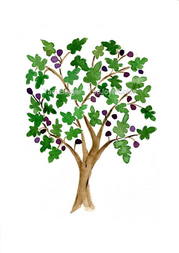 Fig tree images clipart graphic royalty free stock Fig tree clipart 3 » Clipart Portal graphic royalty free stock