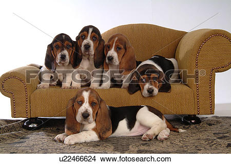 Finnish hound clipart clipart banner freeuse download Stock Photo of faithful, domestic animal, companion, canine, close ... banner freeuse download