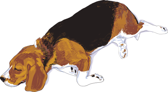 Finnish hound clipart clipart freeuse stock Finnish hound clipart clipart - ClipartFest freeuse stock