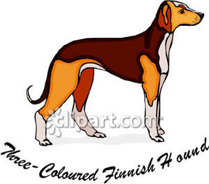 Finnish hound clipart clipart clip free download Three-Coloured Finnish Hound - Royalty Free Clipart Picture clip free download