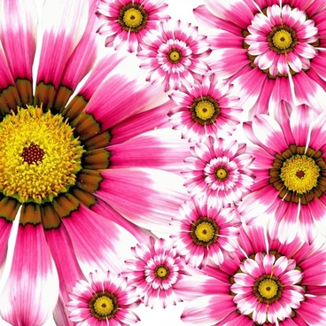 Fiower picture freeuse library Flower images free stock photos download (10,896 Free stock photos ... freeuse library