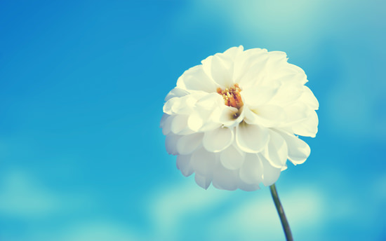 Fiower picture picture download 60 Beautiful Flowers Wallpapers [Wallpaper Wednesday] - Hongkiat picture download