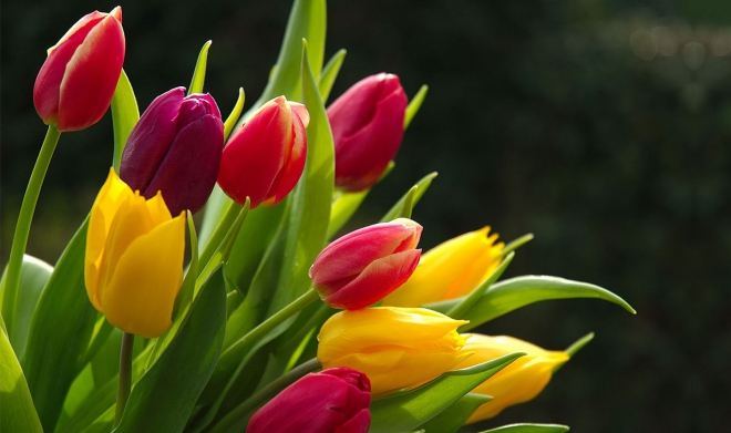 Fiower picture vector freeuse 40 Beautiful Flower Wallpapers for your desktop vector freeuse