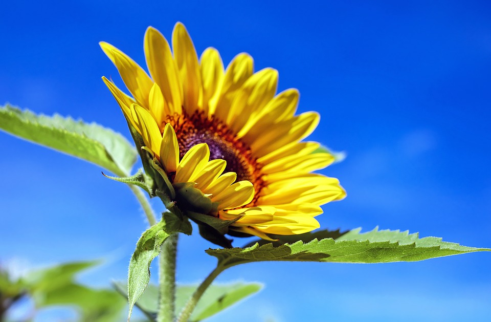 Fiower picture picture download Flower - Free images on Pixabay picture download