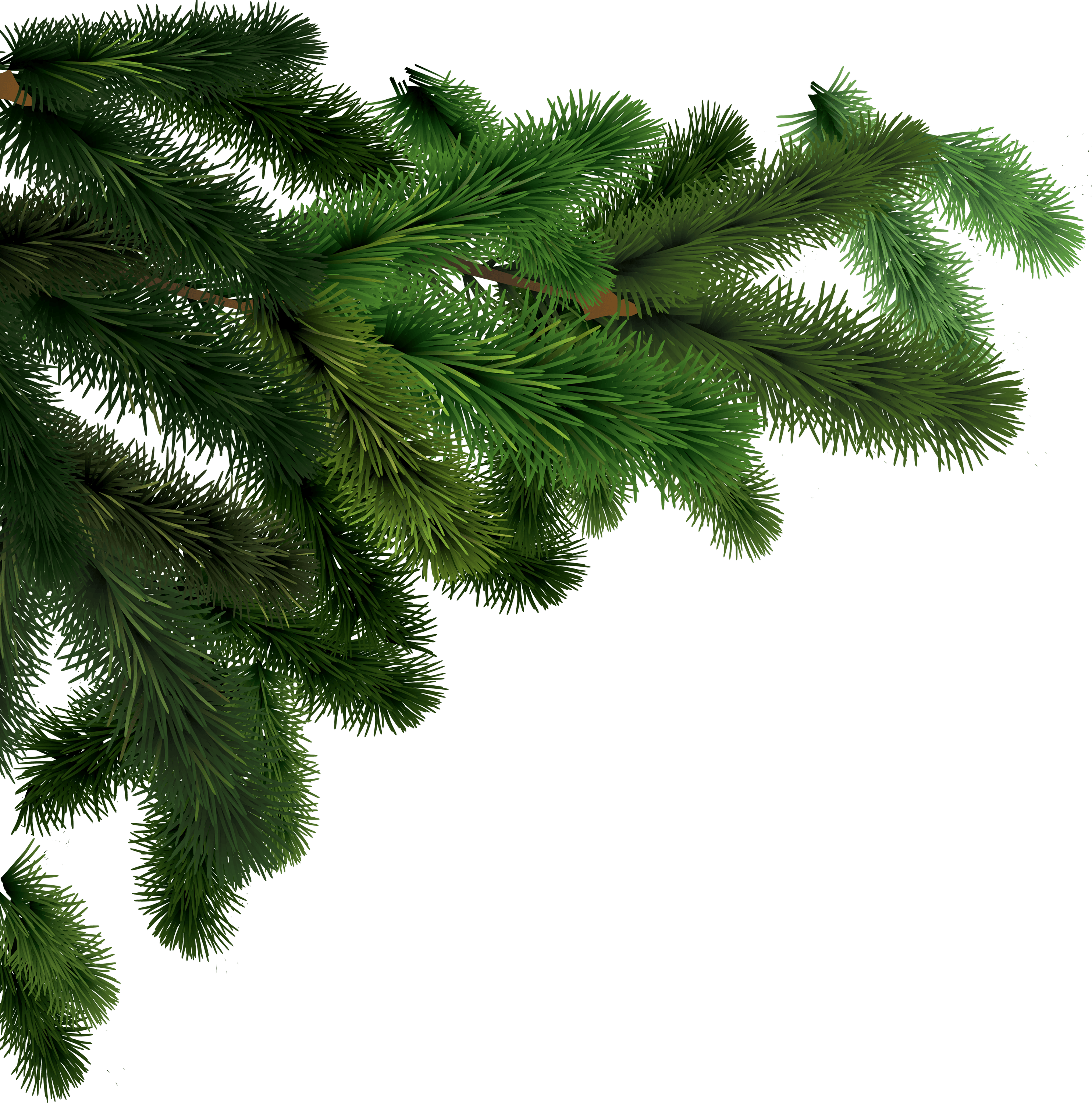 Fir tree clipart png black and white Side Branches Fir Tree transparent PNG - StickPNG png black and white