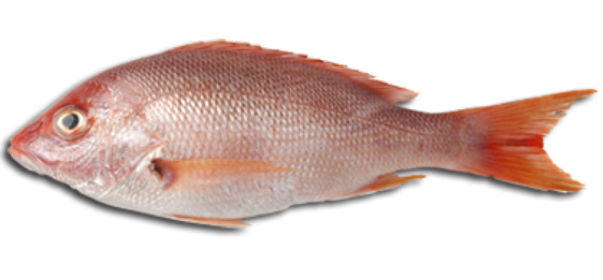 Fish protein clipart clip royalty free Fish And Meat PNG Transparent Fish And Meat.PNG Images. | PlusPNG clip royalty free