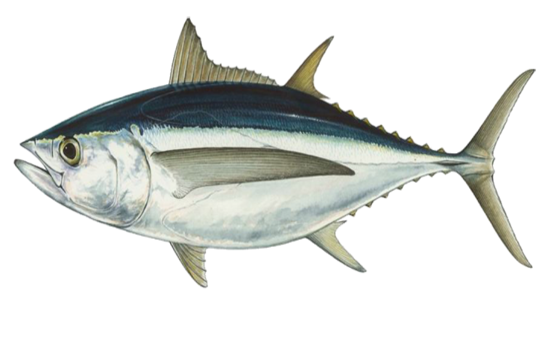Fish and rice clipart jpg transparent library Seafood Recipes | Sustainable Seafood Fishery | Port Orford jpg transparent library