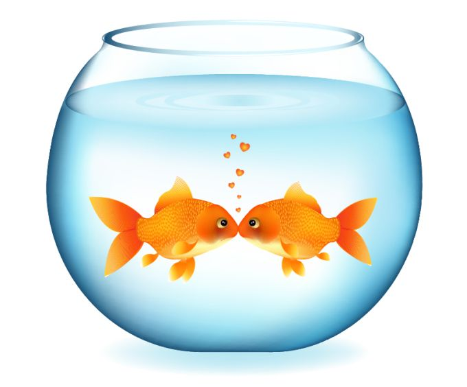 Fish bowl clipart free. Cat and in clip