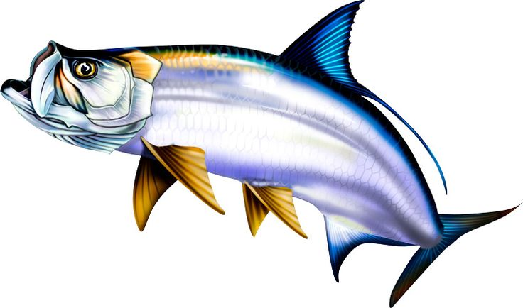 Fish clipart for photoshop vector free library Tarpon Illustration Photoshop clipart. http://www.spiritgraphix ... vector free library