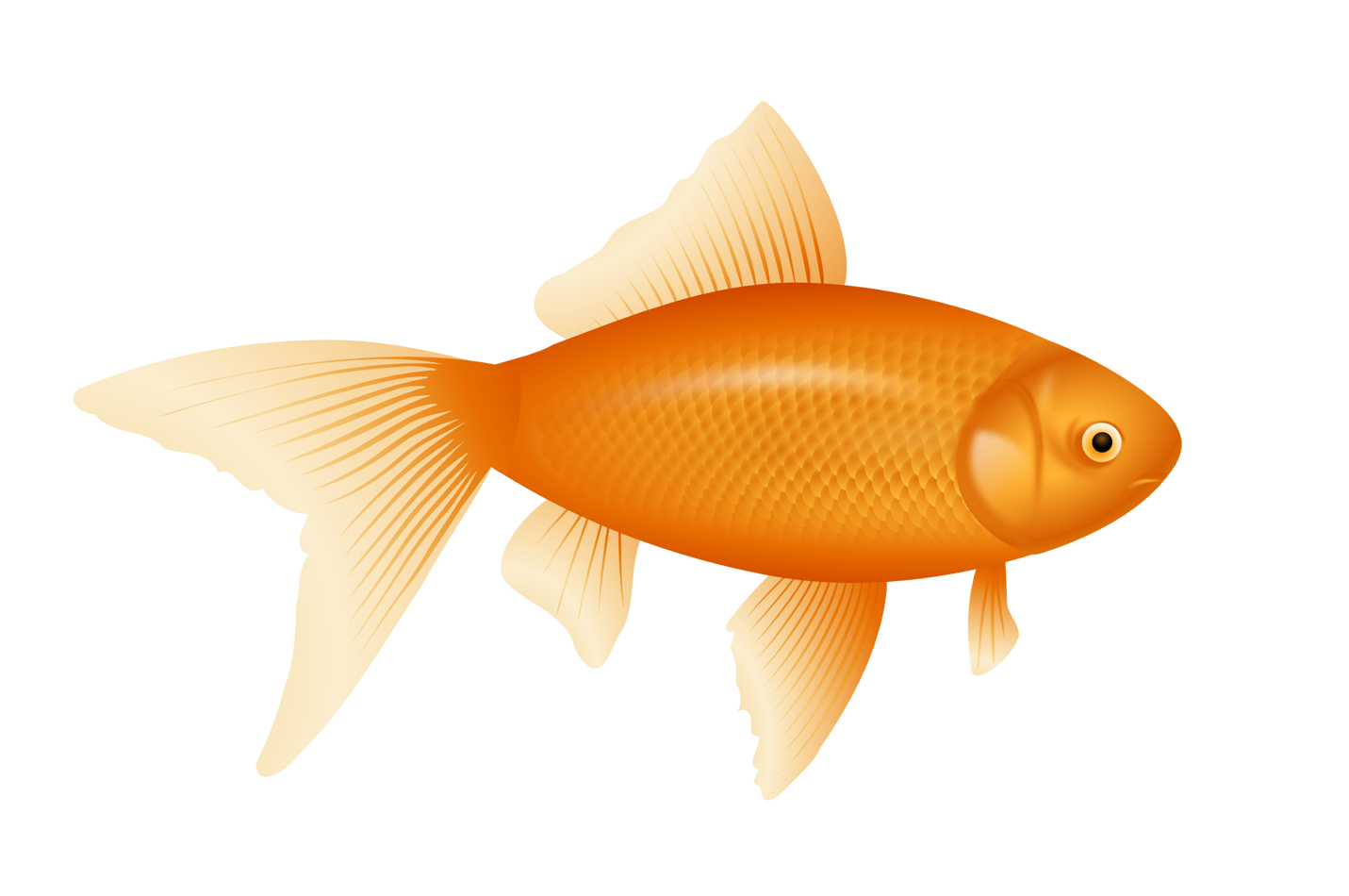 Fish clipart png orange stock Fish Clipart PNG Transparent Images free download stock