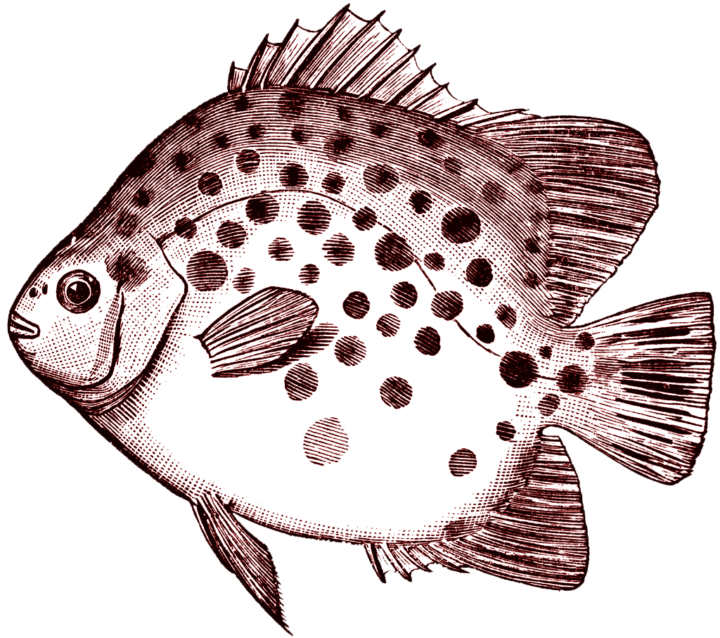Fish clipart vintage clip art library stock FREE ViNTaGE DiGiTaL STaMPS**: Free Digital Stamp - Spotted Fish ... clip art library stock