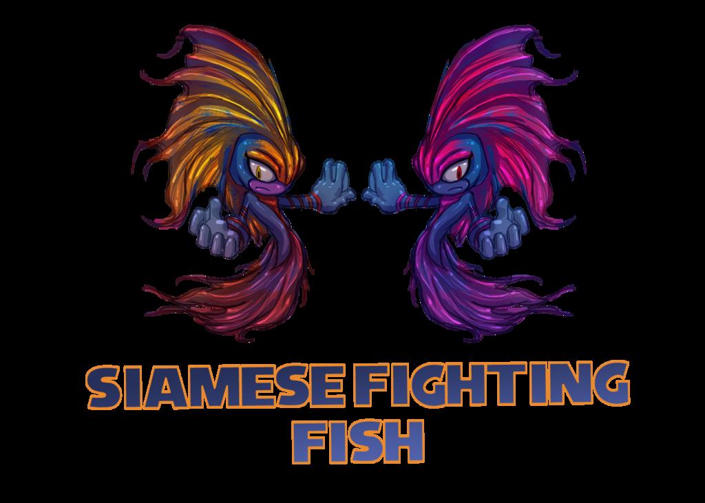 Fish divider clipart picture freeuse library bettasplendensinfo   Betta splendens, Siamese fighting fish, fish ... picture freeuse library