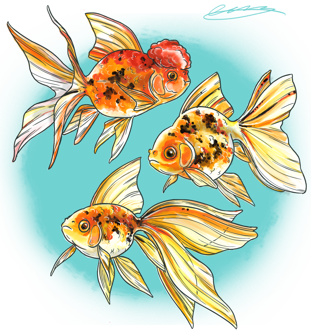 Fish feeder clipart graphic freeuse Pets - Wakley Animation graphic freeuse
