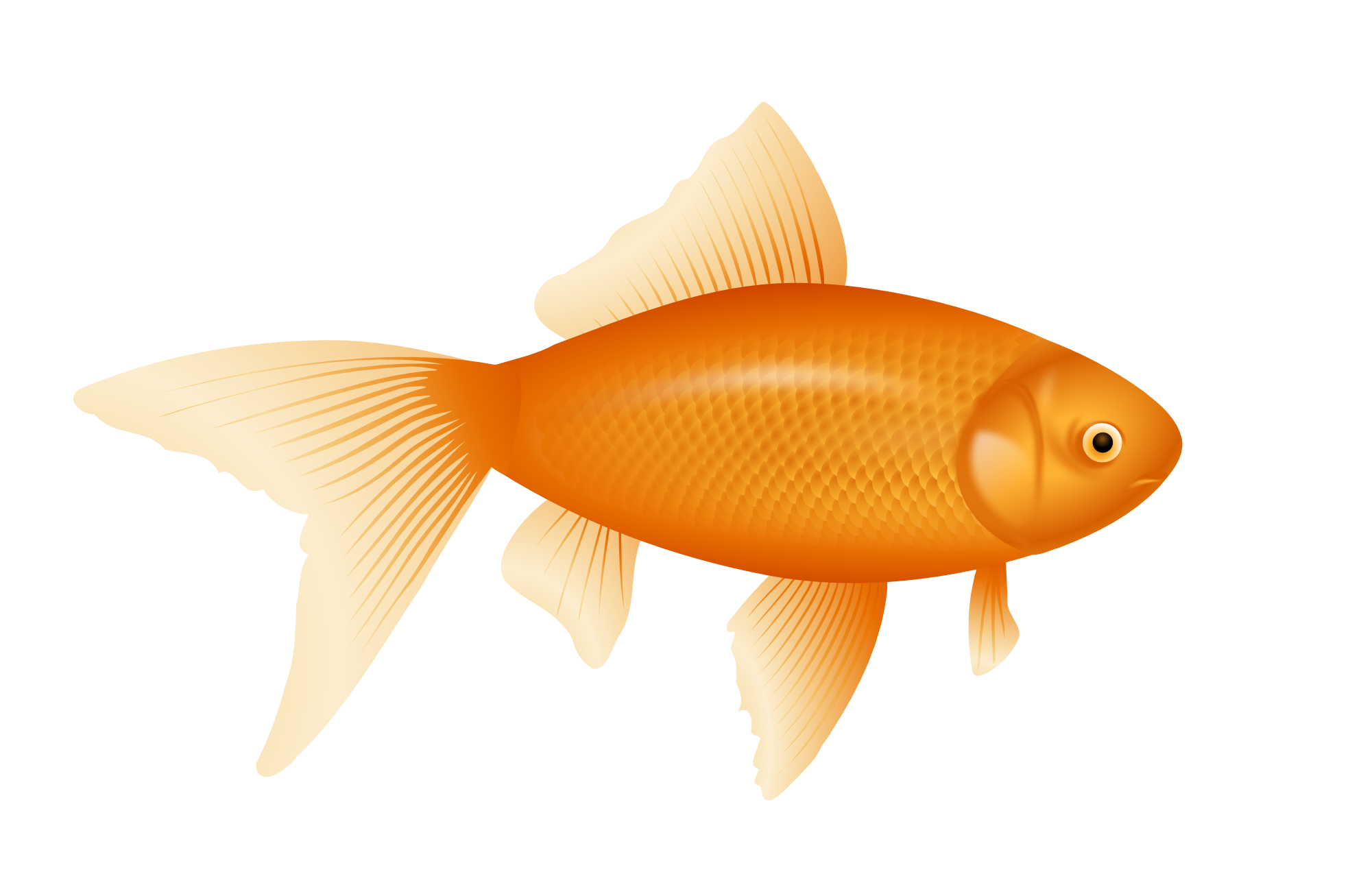 gold fish PNG image | cliparts ... | Pinterest | Fish banner freeuse stock