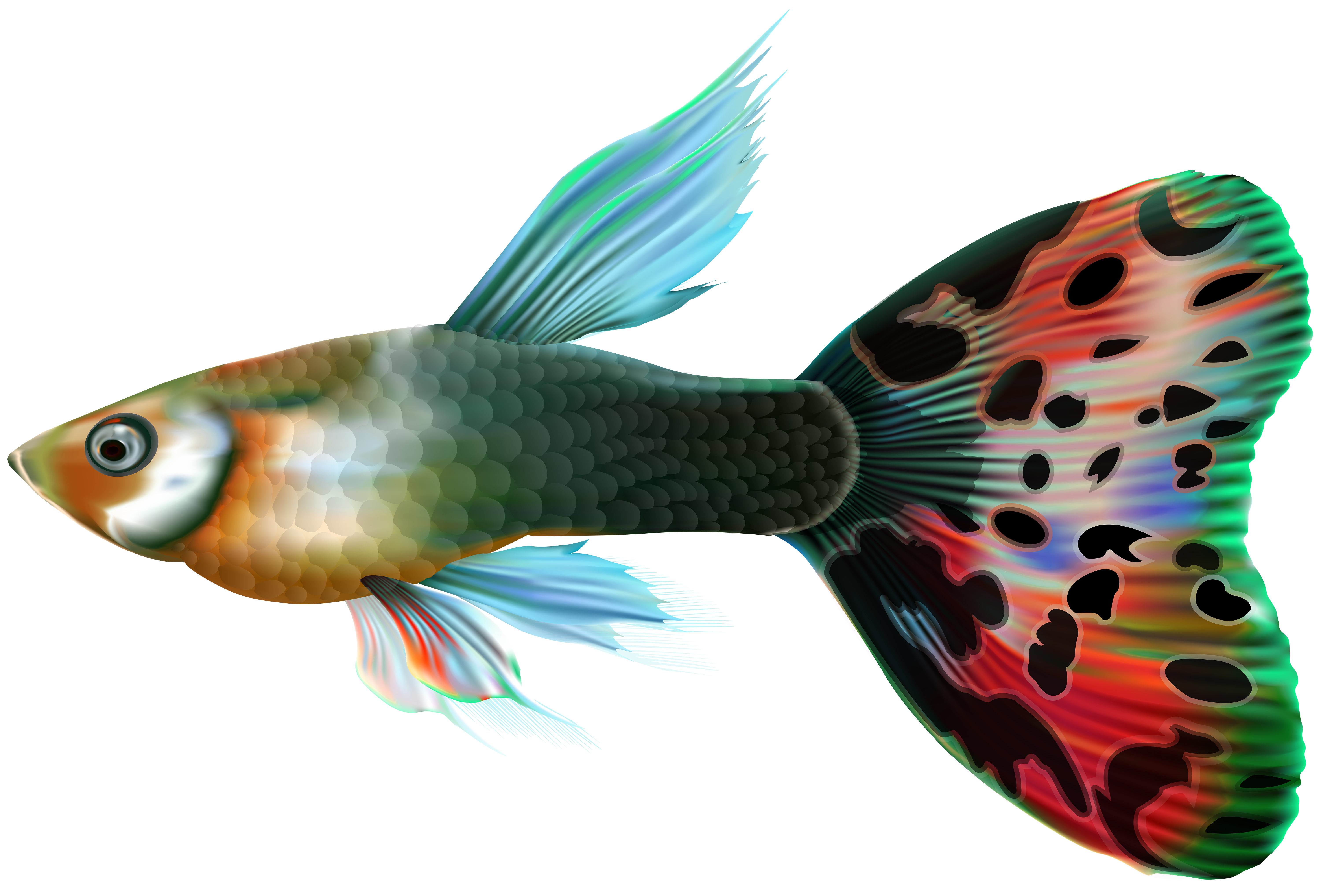 Free clipart fish border clipart svg free stock Male Guppy Fish PNG Clip Art | Gallery Yopriceville - High-Quality ... svg free stock
