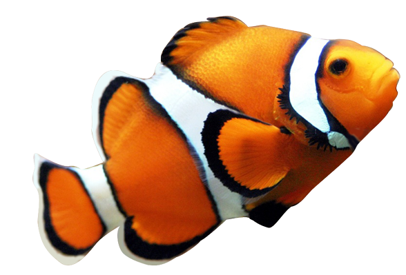 Fish in the sea realistic clipart vector library stock clown fish pictures | Realistic Clipart from Pre-masked photographs ... vector library stock