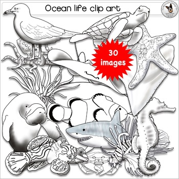 Fish in the sea realistic clipart graphic free library Marine, Ocean, Sea, Fish, Underwater and Tidepool Realistic Clip Art graphic free library