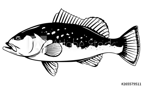 Fish in the sea realistic clipart svg black and white One Red grouper fish in side view, high quality illustration of sea ... svg black and white