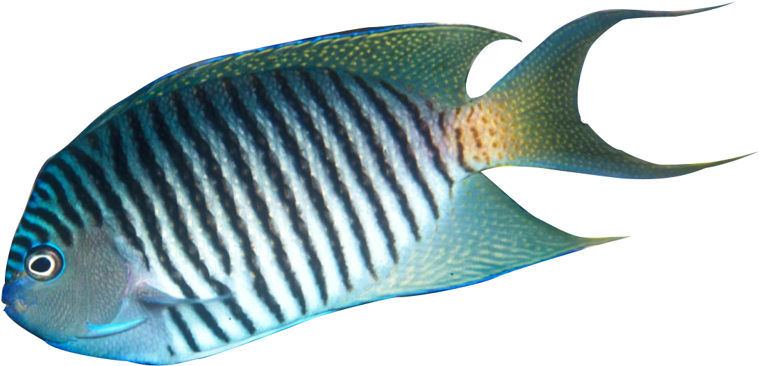 Fish in the sea realistic clipart clip art free HD Tropical Fish Clipart Realistic Transparent PNG Image Download ... clip art free