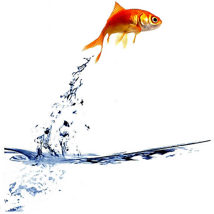 Freetoedit jump . Fish jumping from water clipart