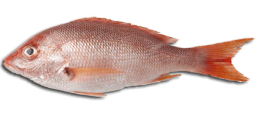 Fish meat clipart picture black and white download fish meat png - Free PNG Images | TOPpng picture black and white download