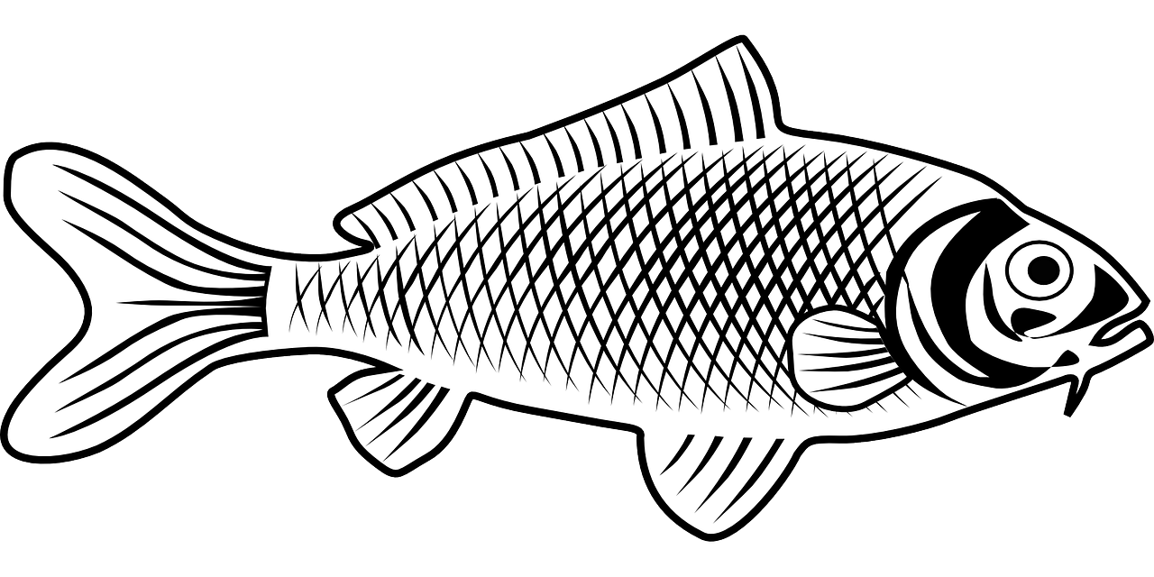 Fish tail clipart black and white png freeuse stock Fish Animal Biology Fauna PNG Image - Picpng png freeuse stock