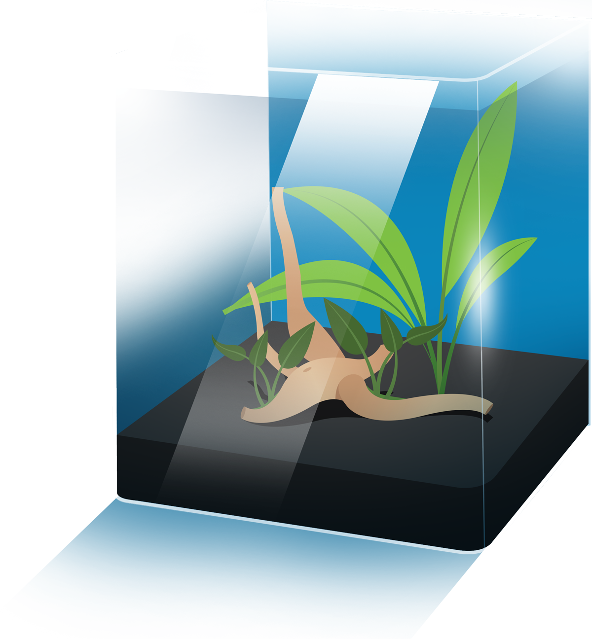 Fish tank plants clipart clipart free stock Fish Tank Guide - The beginners guide to setting up your first aquarium clipart free stock