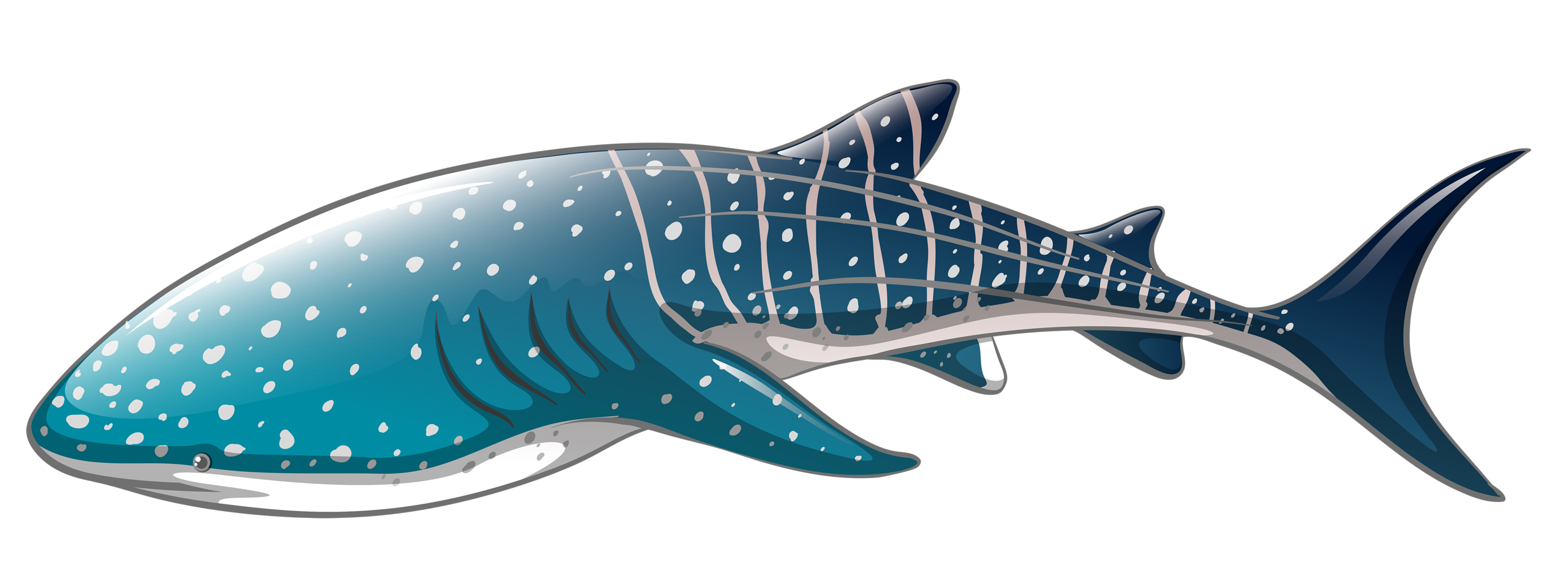 Fish underwater clipart graphic stock 2.png | Album graphic stock