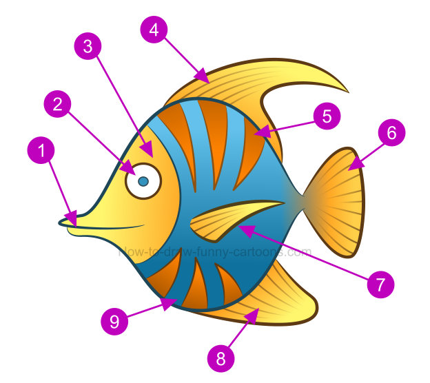 Fish with different mouth shapes with color clipart. How to draw a