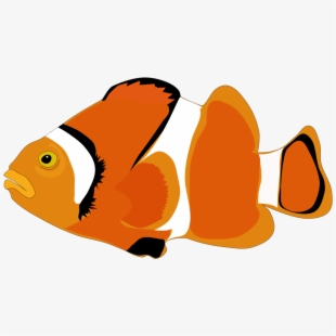 Foot ocean sunfish computer. Fish with feet clipart