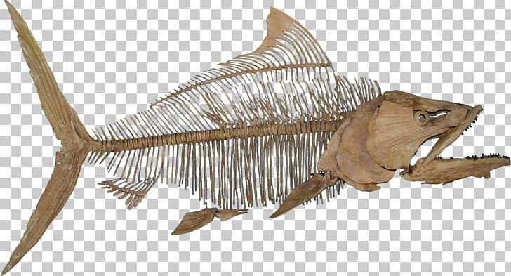 Fossil paleontology skeleton reptile. Fish with feet clipart
