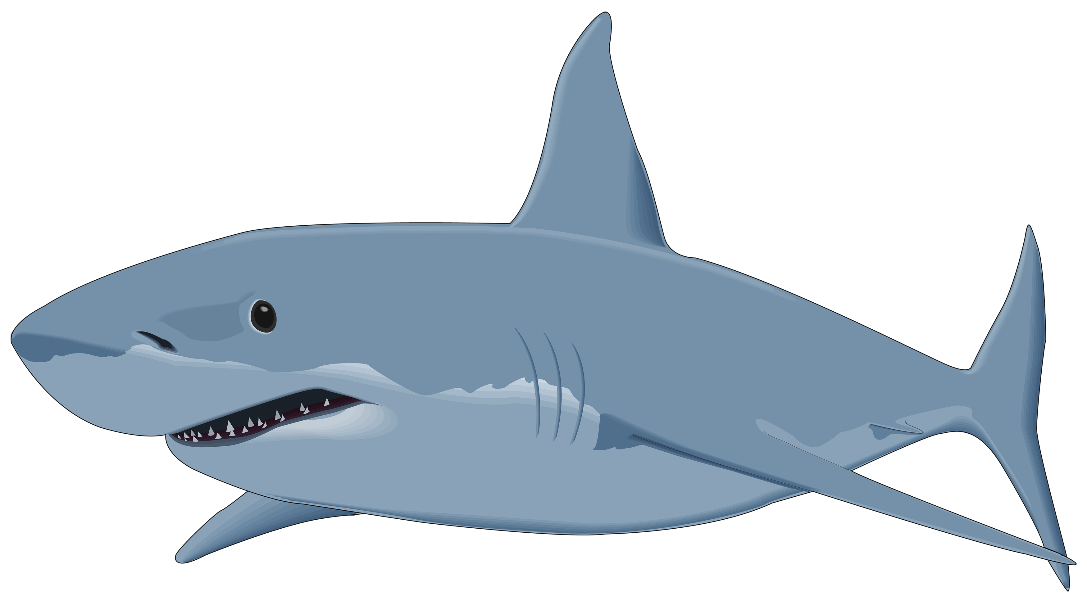 Grey fish clipart svg transparent Shark PNG Clipart Image - Best WEB Clipart svg transparent