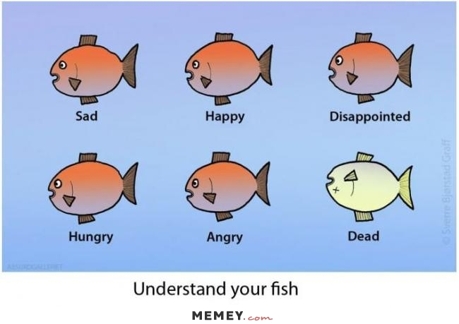 Fishing sayings clipart graphic free download fishing quotes and sayings | Funny fishing pictures US Humor - Clip ... graphic free download