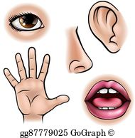 Clip art royalty free. Five senses clipart see