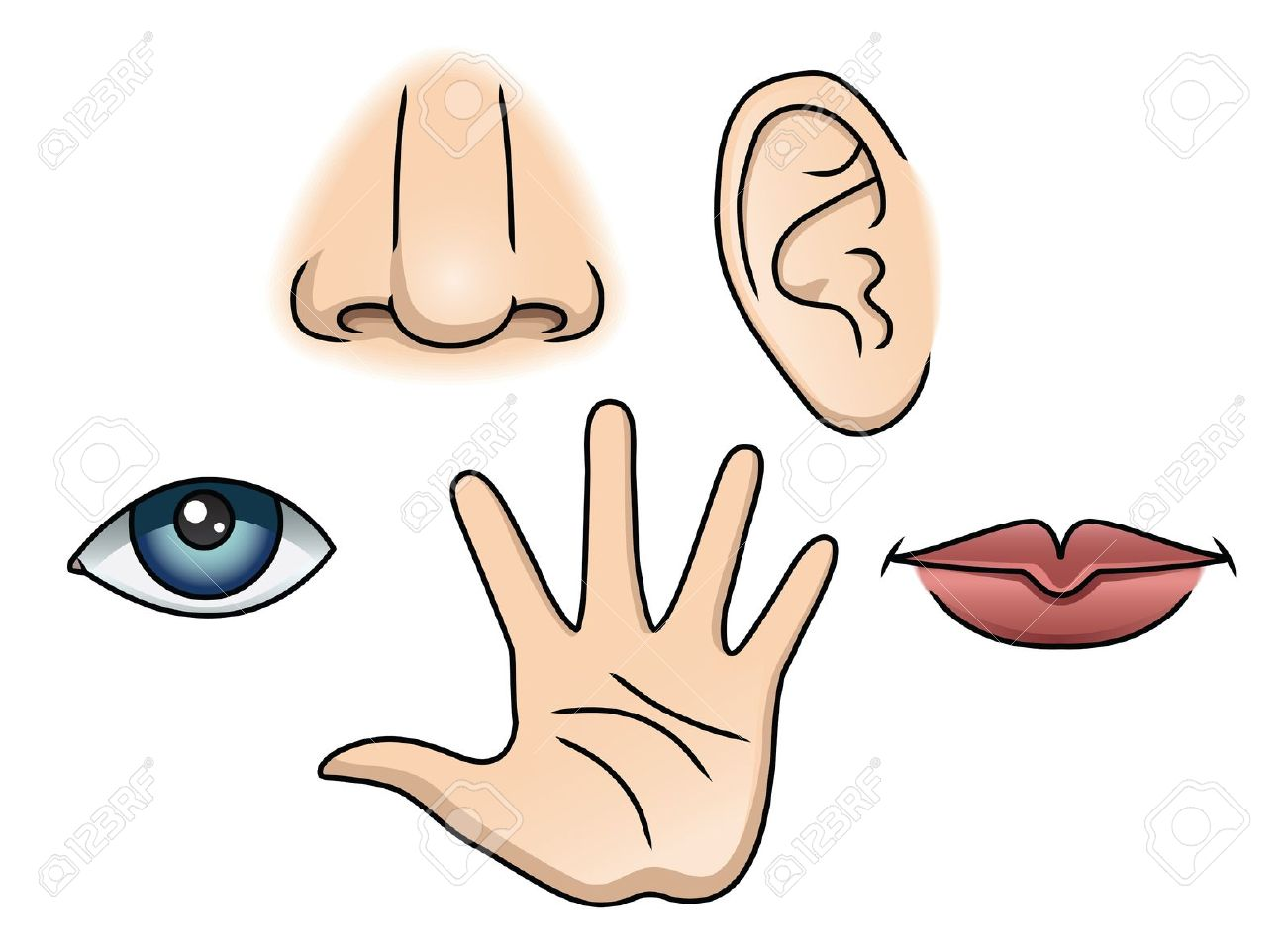 Five senses clipart see.  clipartlook