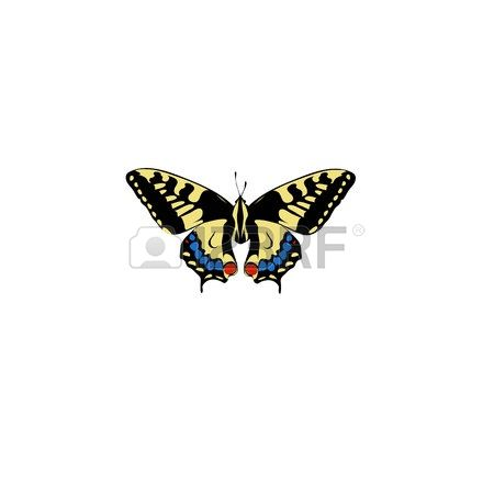 Flag swallow tail clipart graphic transparent 717 Swallowtail Stock Vector Illustration And Royalty Free ... graphic transparent