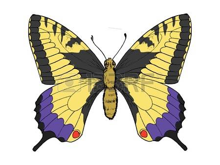 Flag swallow tail clipart clip free stock 717 Swallowtail Stock Vector Illustration And Royalty Free ... clip free stock