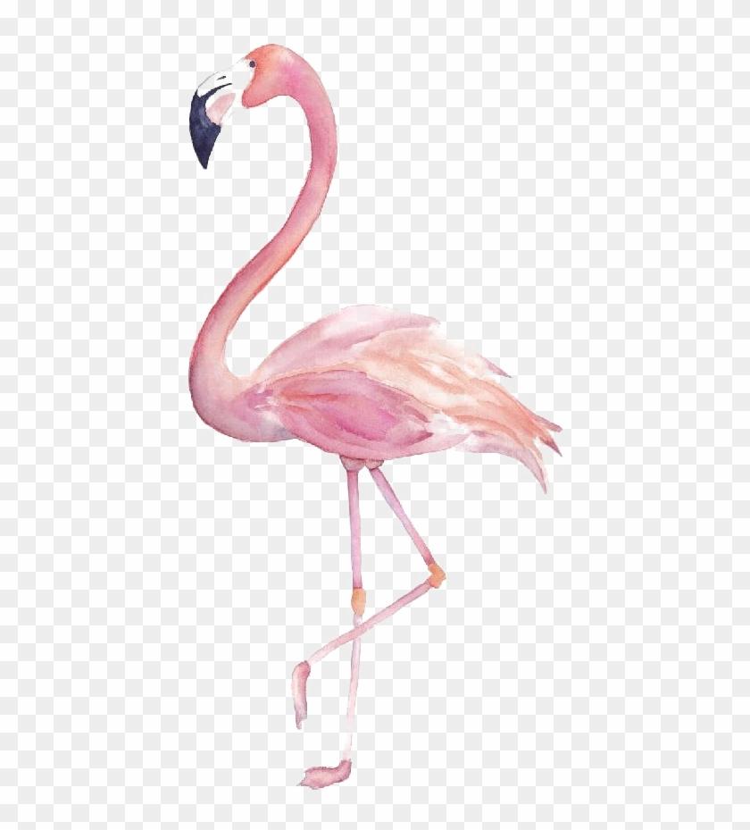 Flamingo clipart transparent background clip freeuse download Flamingo Png Image Transparent - Flamingo Clipart Watercolor, Png ... clip freeuse download