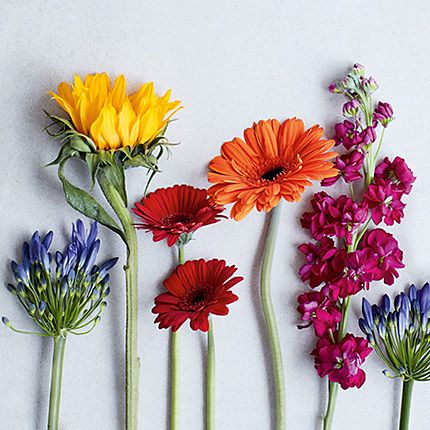 Flawer picture jpg free Flowers & Plants Online | Free Next Day Delivery | M&S jpg free