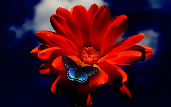 Flawer picture jpg 60 Beautiful Flowers Wallpapers [Wallpaper Wednesday] - Hongkiat jpg