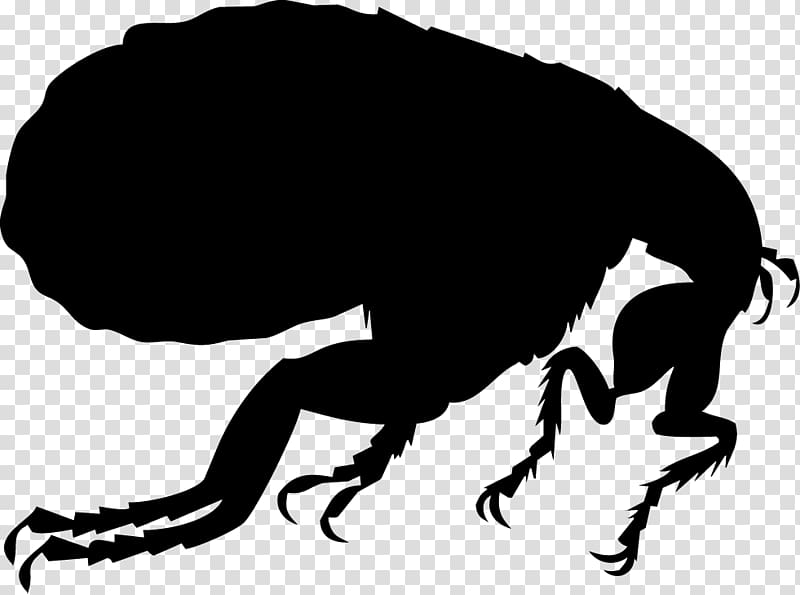 Flea clipart png library Dog flea Silhouette Illustration, flea transparent background PNG ... png library