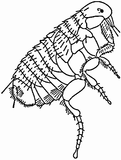 Flea clipart black and white clip art black and white stock Flea PNG Black And White Transparent Flea Black And White.PNG Images ... clip art black and white stock