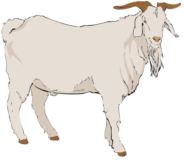 Mammal vertebrate bovine cow. Flexing goat clipart