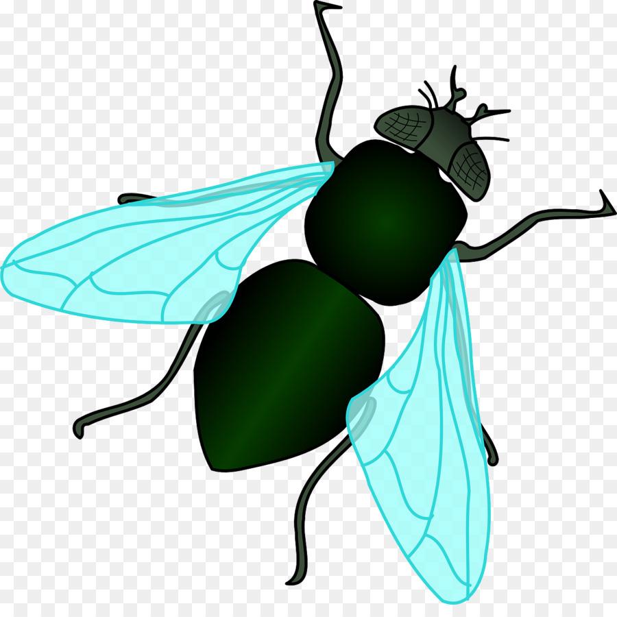 Flies clipart.  clipartlook