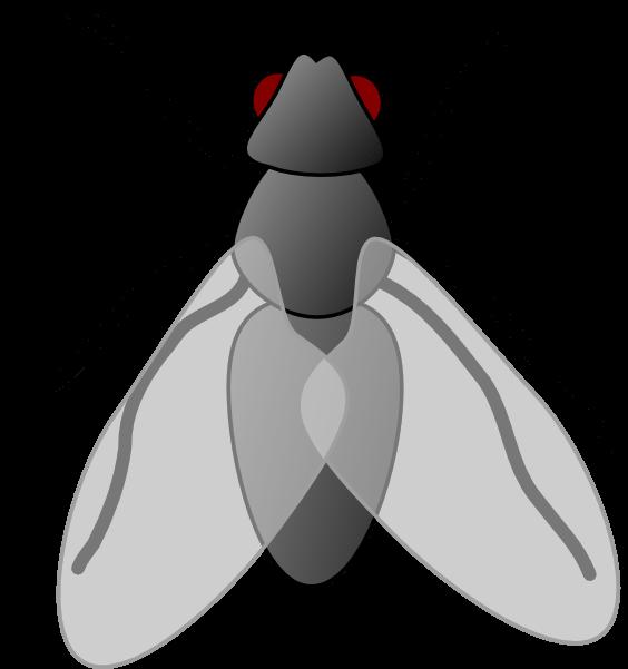 Flies clipart. Cliparts zone