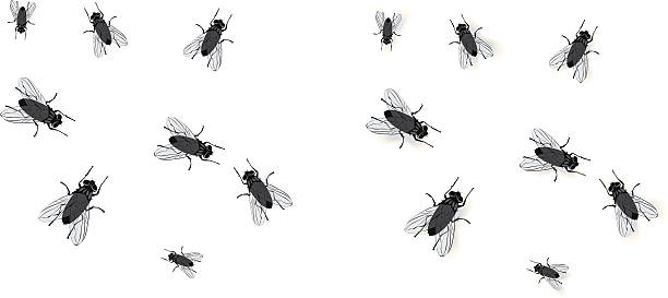 Flies clipart. Station