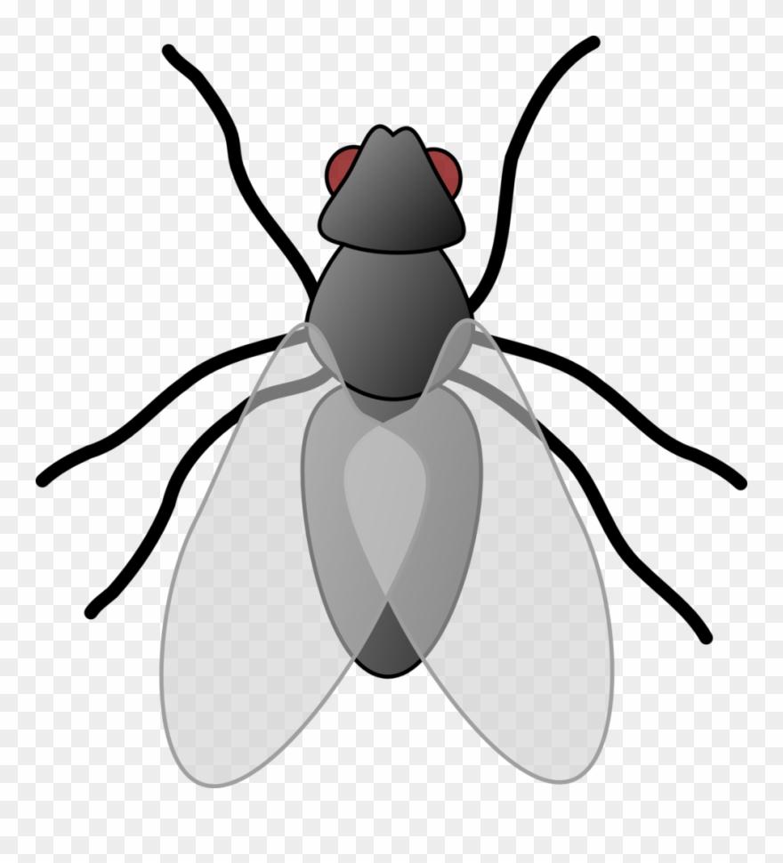 Fly clip art png. Flies clipart